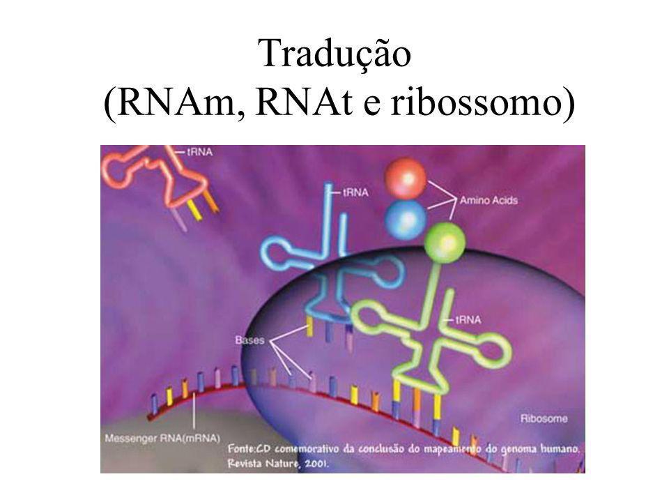 Tradução (RNAm, RNAt e ribossomo)
