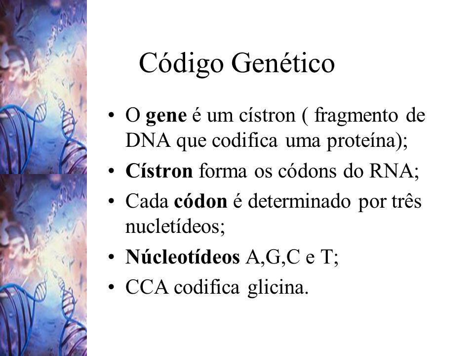 Código Genético O gene é um cístron ( fragmento de DNA que codifica uma proteína); Cístron forma os códons do RNA;