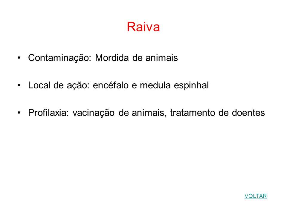 Raiva Contaminação: Mordida de animais