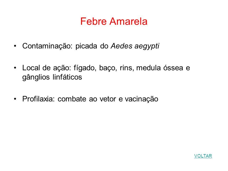 Febre Amarela Contaminação: picada do Aedes aegypti