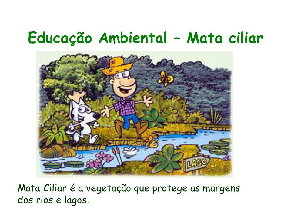 Educação Ambiental – Mata ciliar