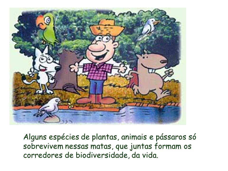 Alguns espécies de plantas, animais e pássaros só