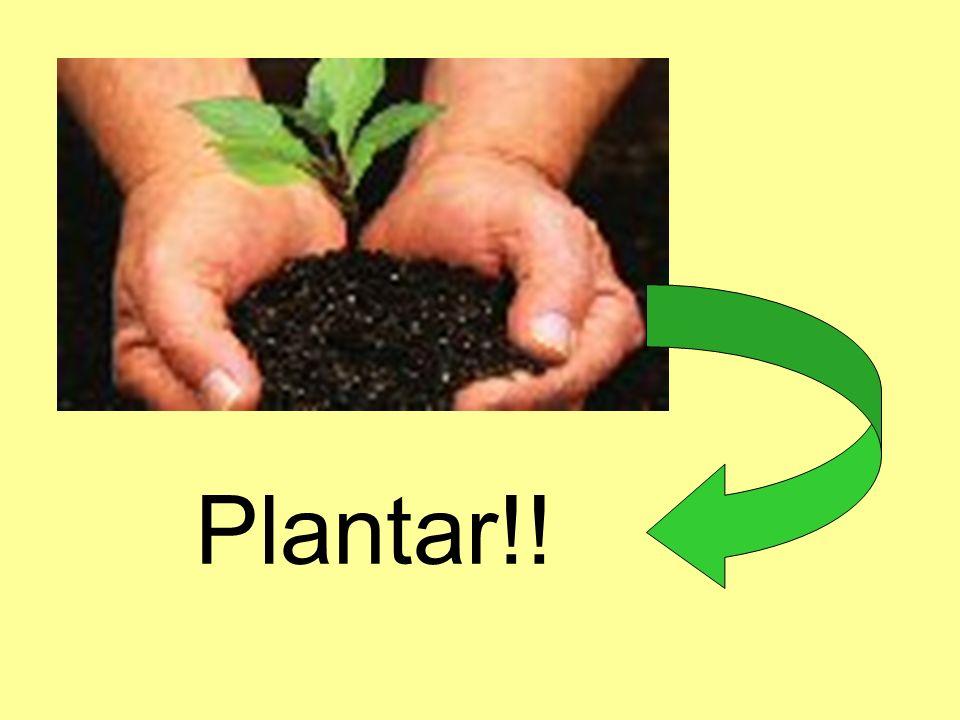 Plantar!!