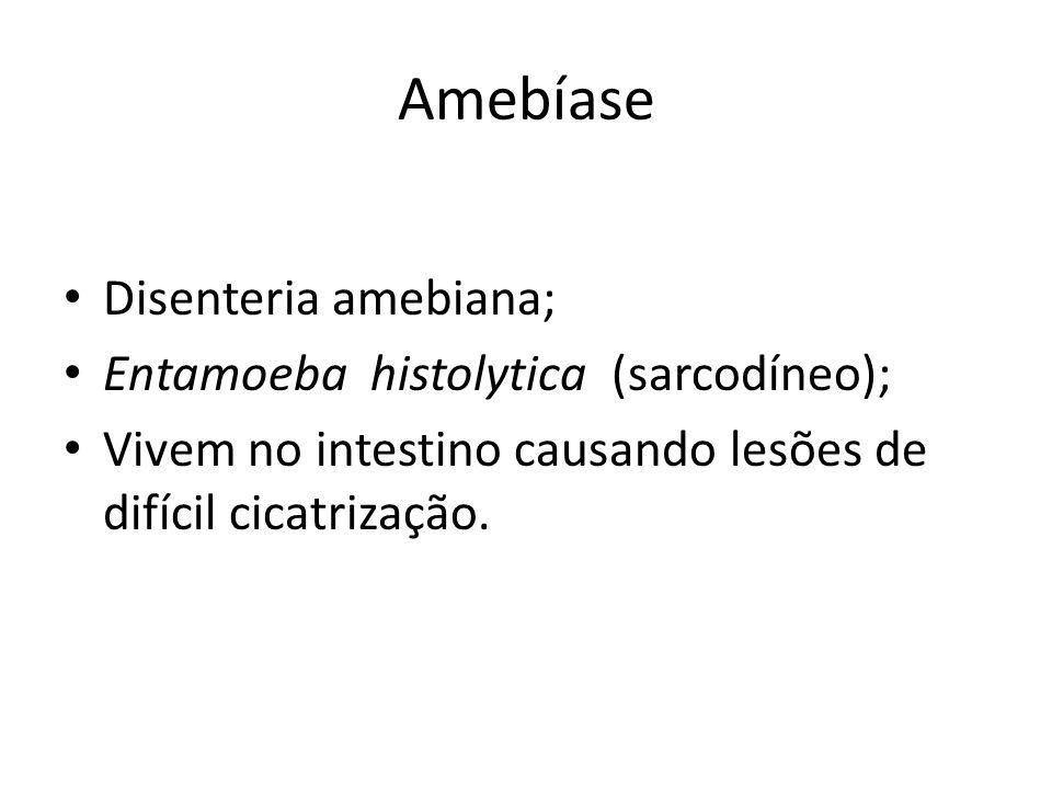 Amebíase Disenteria amebiana; Entamoeba histolytica (sarcodíneo);