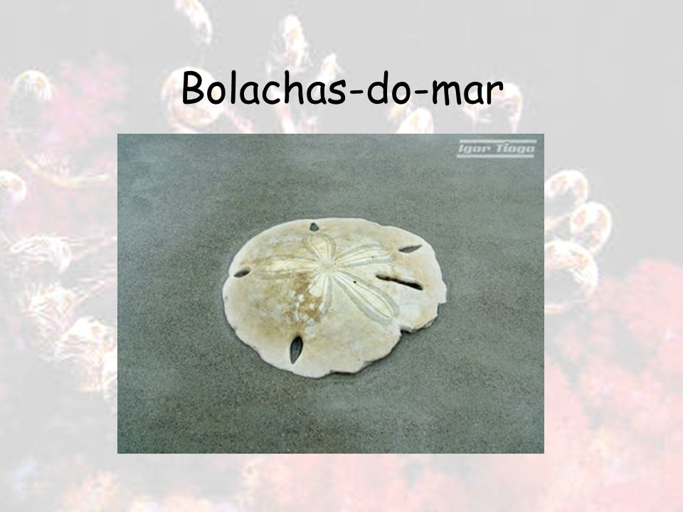 Bolachas-do-mar