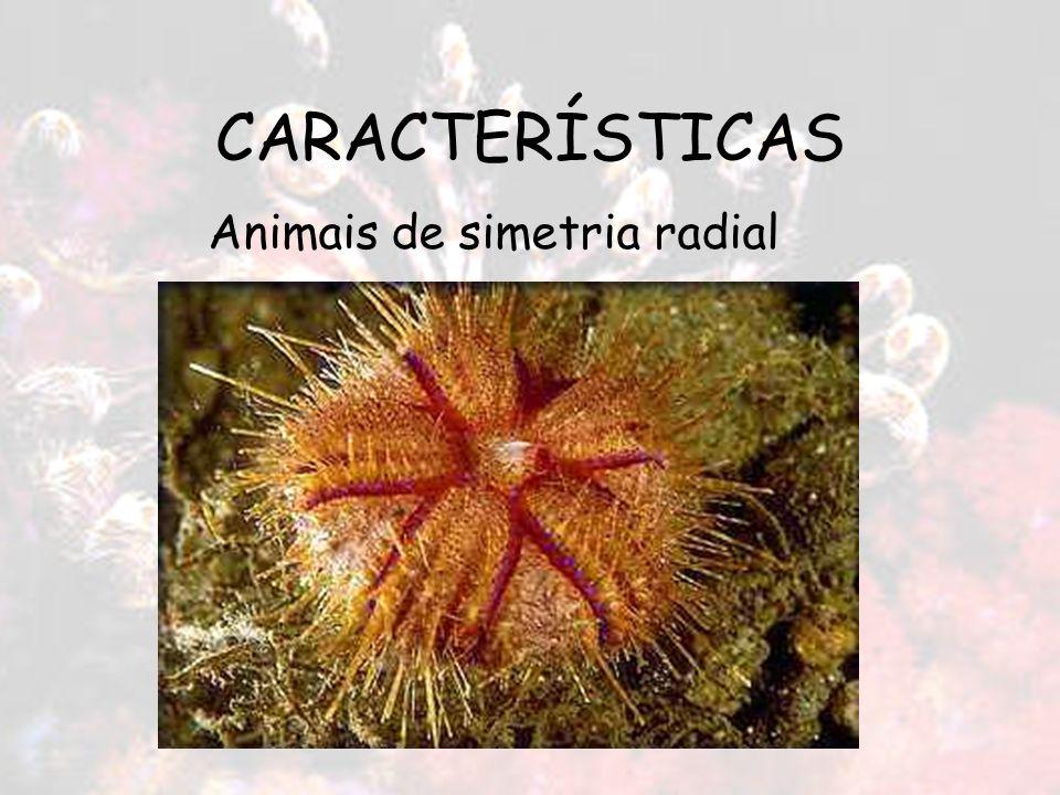 CARACTERÍSTICAS Animais de simetria radial