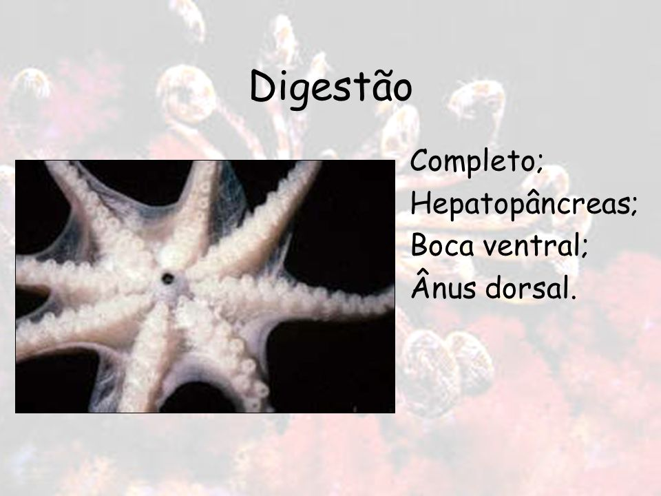 Digestão Completo; Hepatopâncreas; Boca ventral; Ânus dorsal.