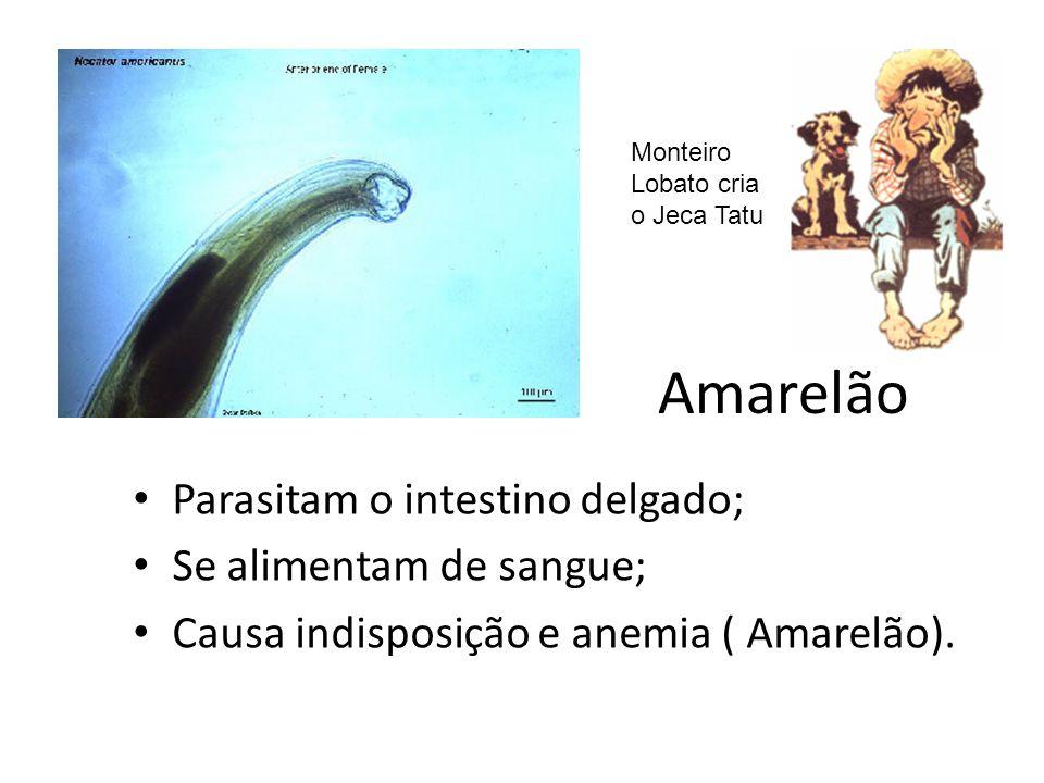 Amarelão Parasitam o intestino delgado; Se alimentam de sangue;