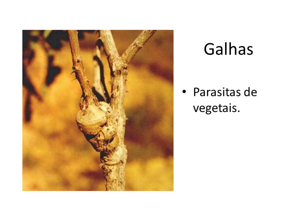 Galhas Parasitas de vegetais.