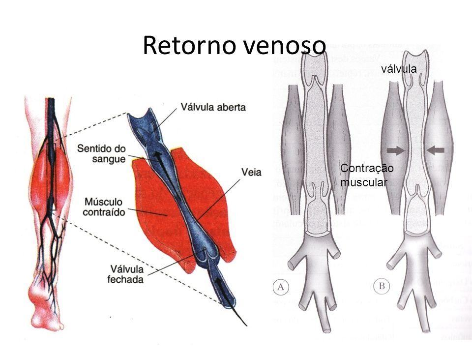 Retorno venoso válvula Contração muscular