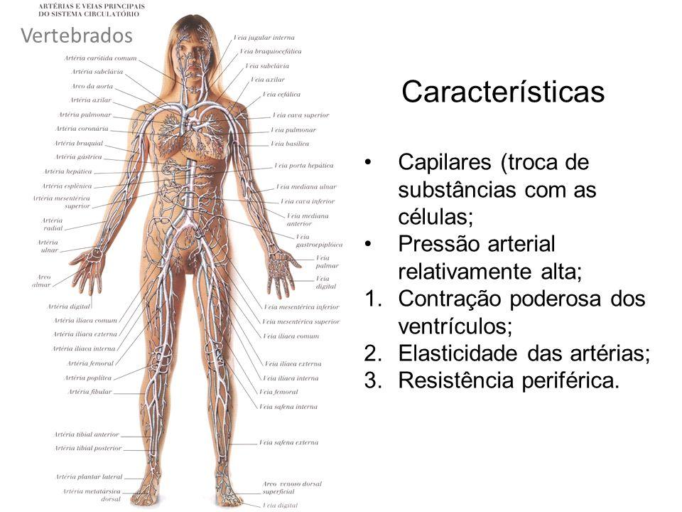Características Vertebrados