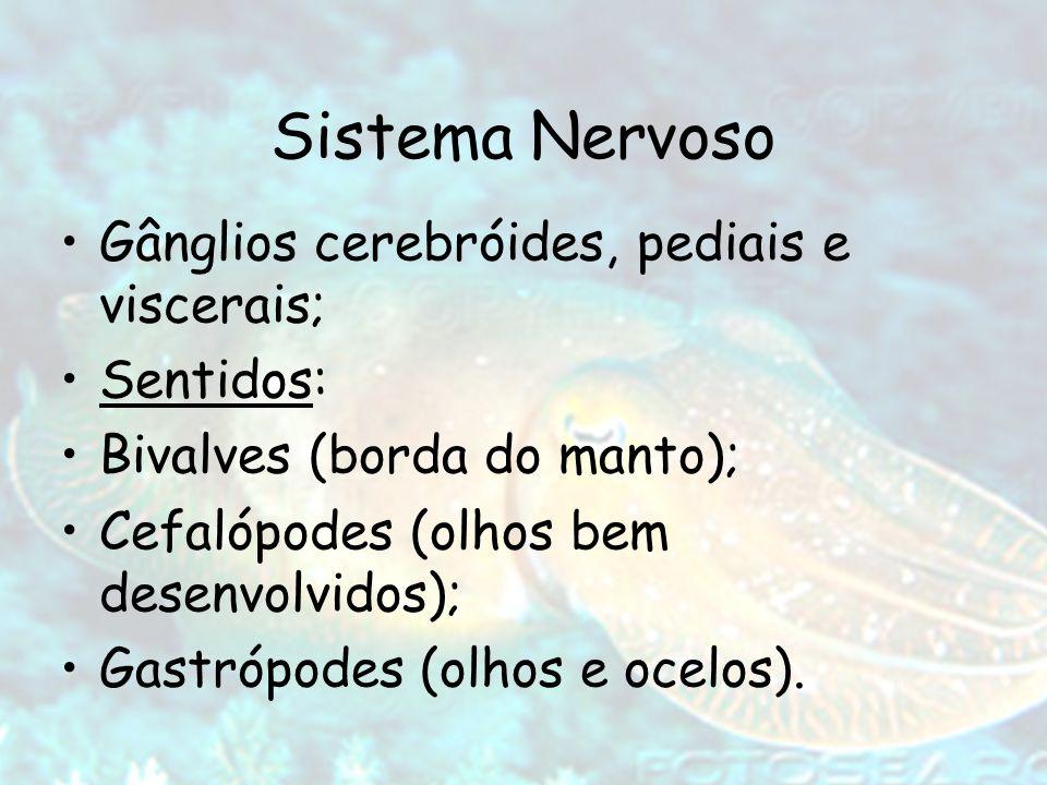 Sistema Nervoso Gânglios cerebróides, pediais e viscerais; Sentidos:
