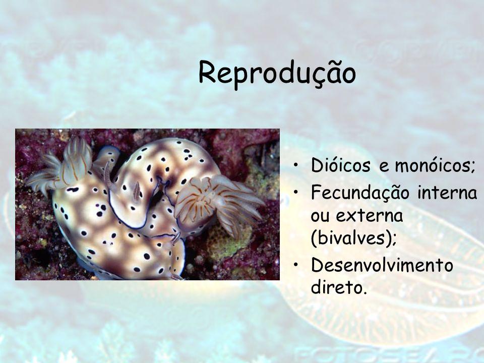 Reprodução Dióicos e monóicos;