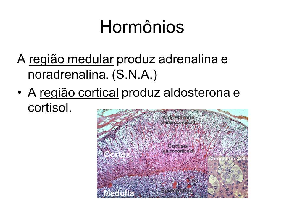 Hormônios A região medular produz adrenalina e noradrenalina. (S.N.A.)