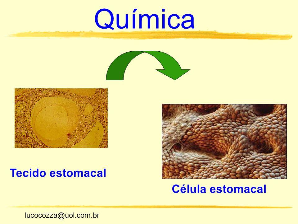 Química Tecido estomacal Célula estomacal lucocozza@uol.com.br