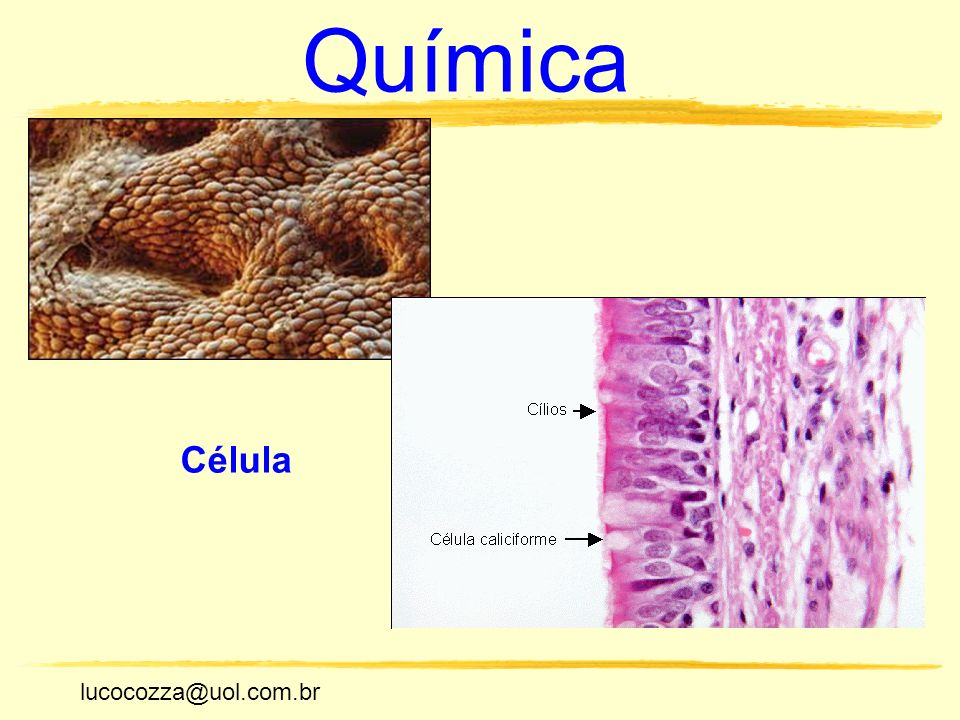 Química Célula lucocozza@uol.com.br