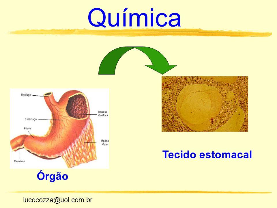 Química Tecido estomacal Órgão lucocozza@uol.com.br