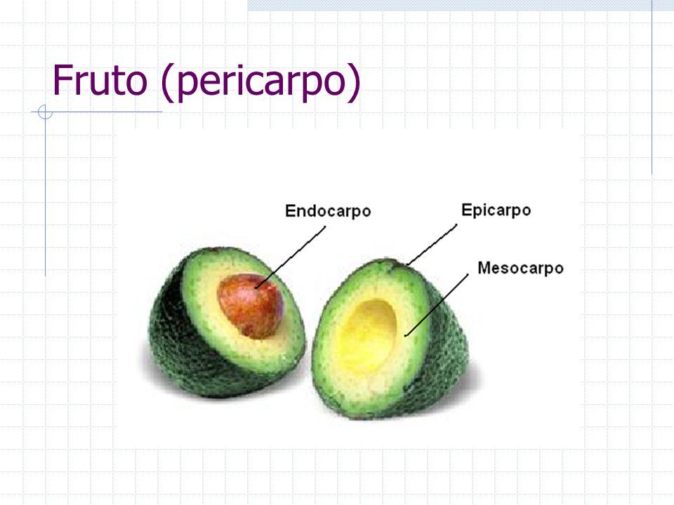 Fruto (pericarpo)