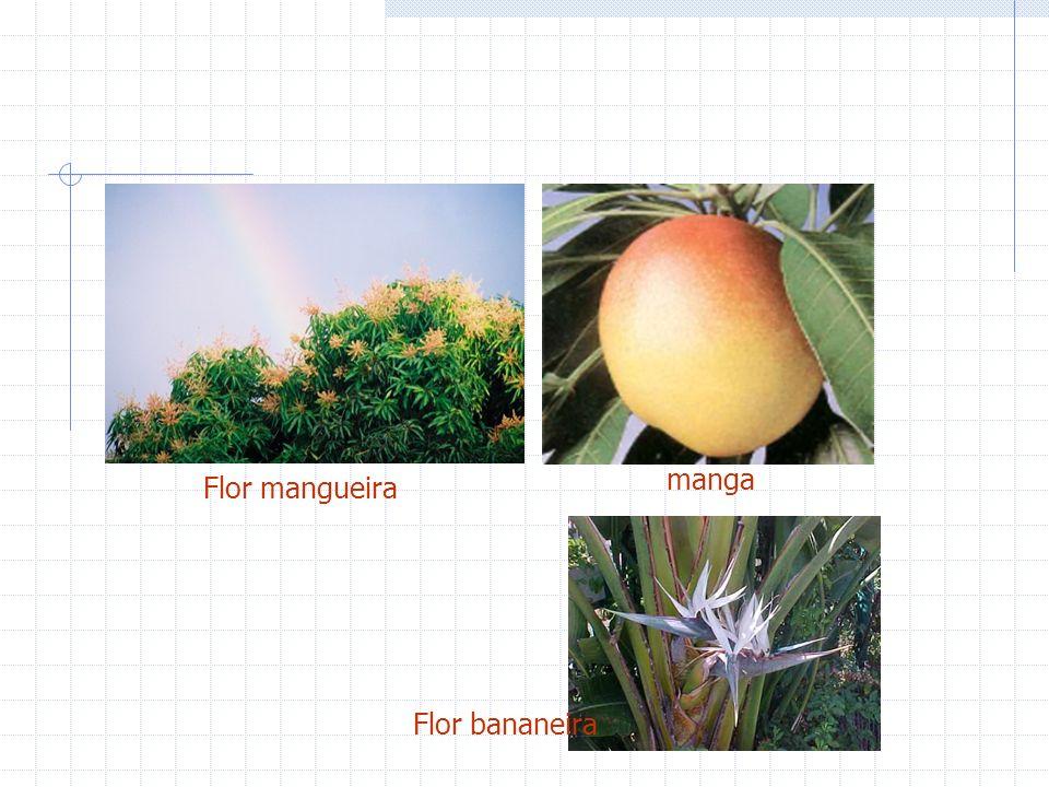 manga Flor mangueira Flor bananeira