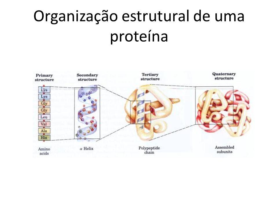 Organização estrutural de uma proteína