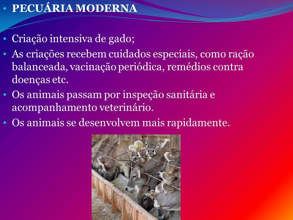 PECUÁRIA MODERNA Criação intensiva de gado;