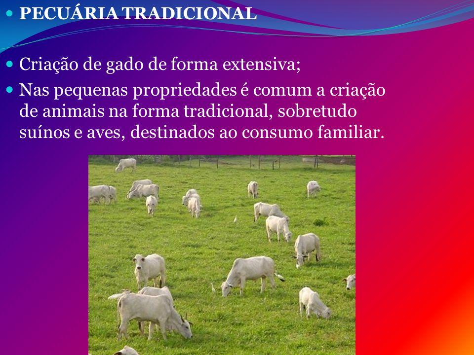 Criação de gado de forma extensiva;