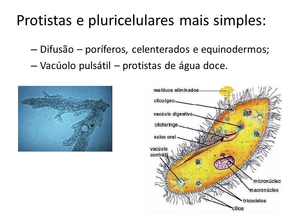 Protistas e pluricelulares mais simples: