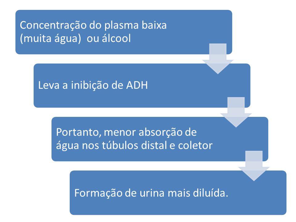 Concentração do plasma baixa (muita água) ou álcool