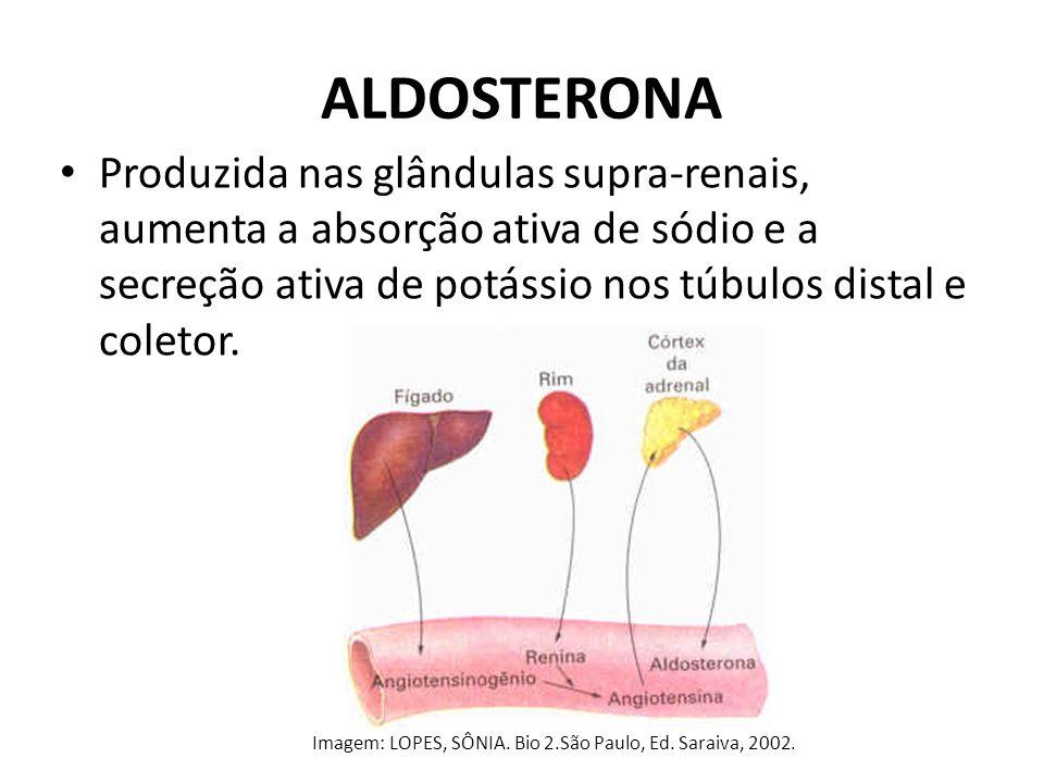 ALDOSTERONA Produzida nas glândulas supra-renais, aumenta a absorção ativa de sódio e a secreção ativa de potássio nos túbulos distal e coletor.
