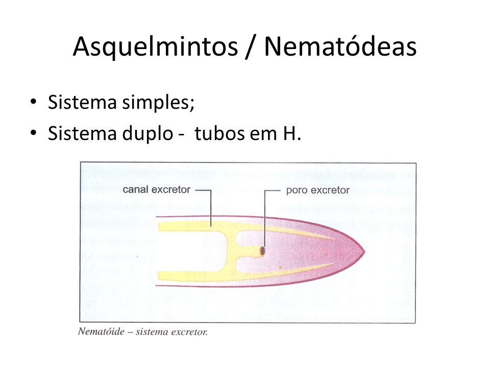 Asquelmintos / Nematódeas