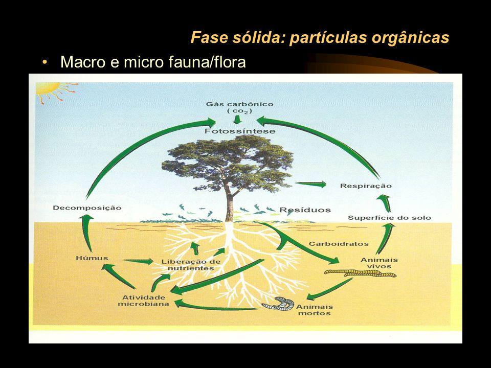 Fase sólida: partículas orgânicas