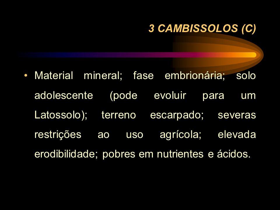 3 CAMBISSOLOS (C)