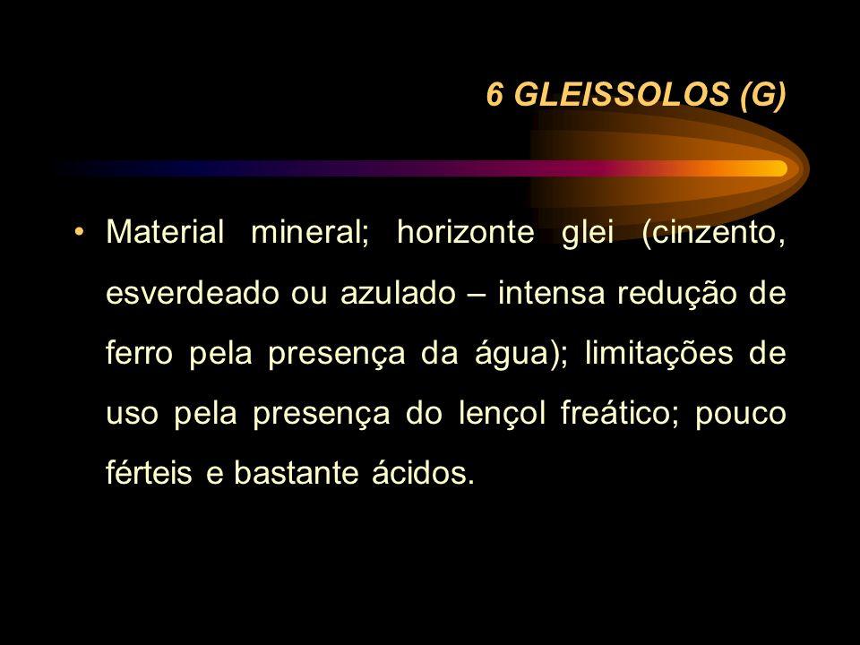6 GLEISSOLOS (G)