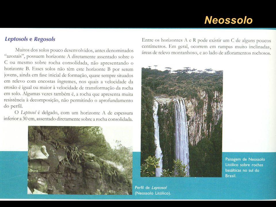 Neossolo