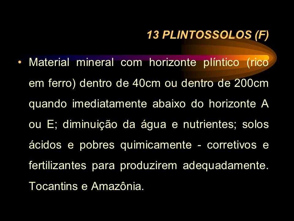 13 PLINTOSSOLOS (F)