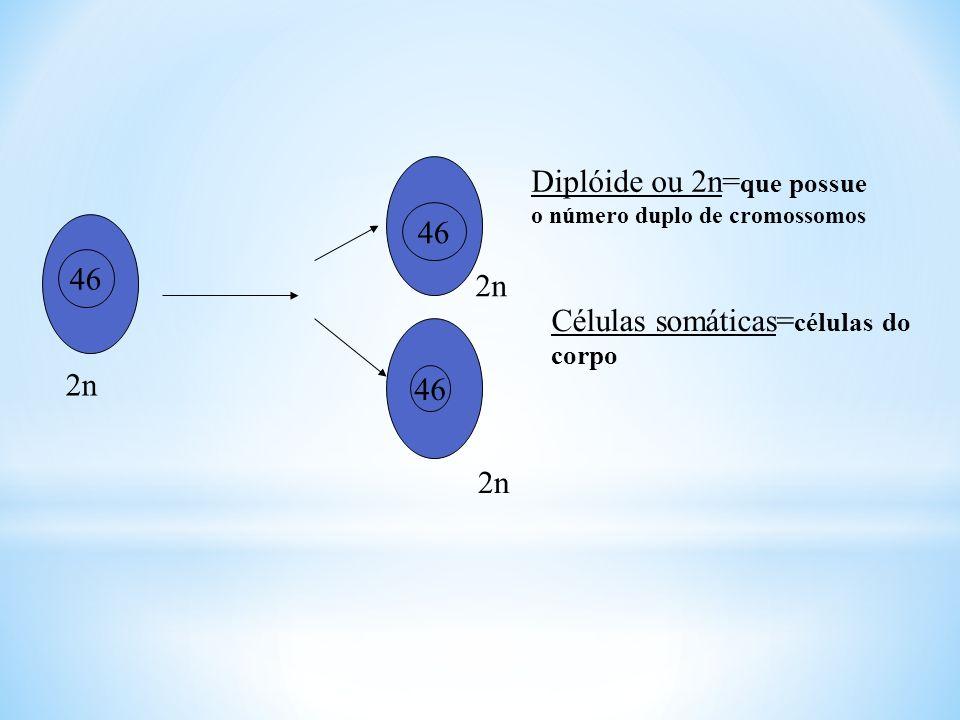 Diplóide ou 2n=que possue