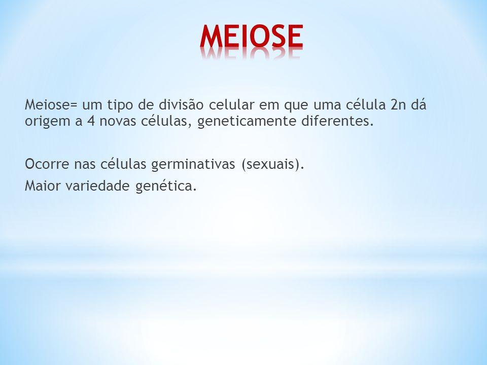 MEIOSE