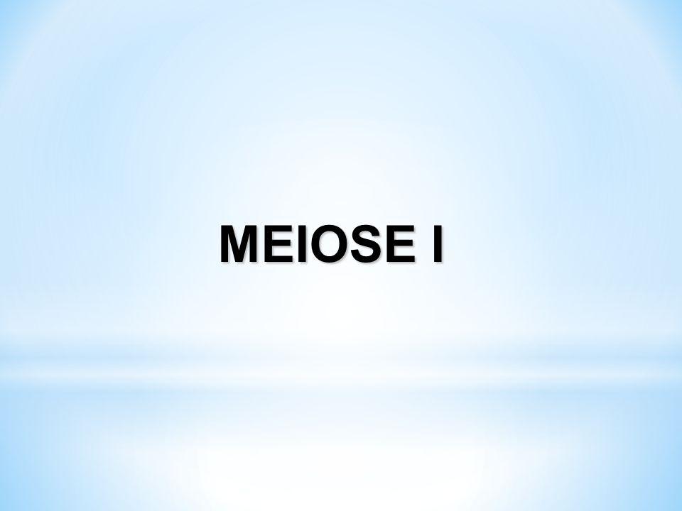 MEIOSE I