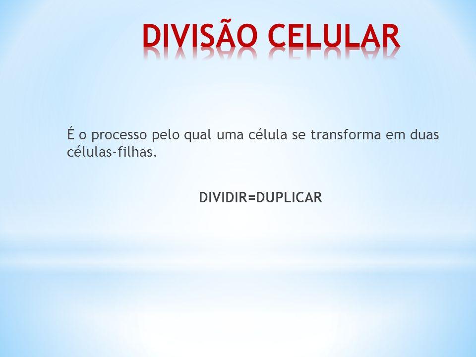 DIVISÃO CELULAR É o processo pelo qual uma célula se transforma em duas células-filhas.