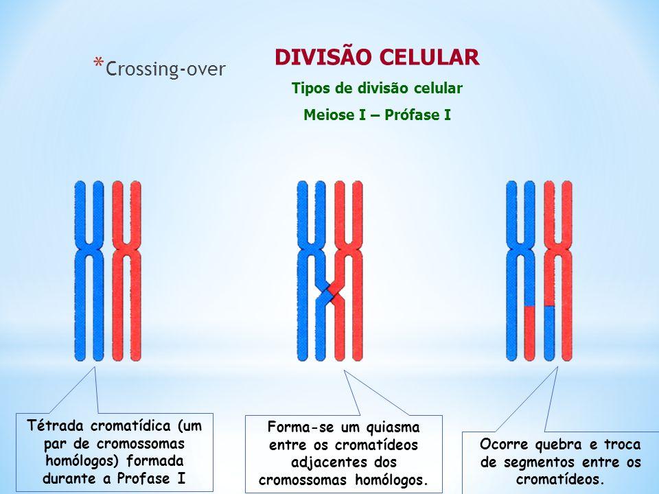 DIVISÃO CELULAR Crossing-over Tipos de divisão celular