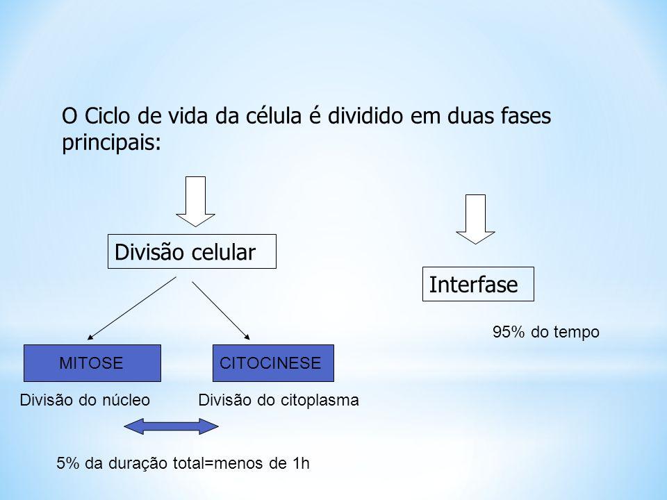 O Ciclo de vida da célula é dividido em duas fases principais: