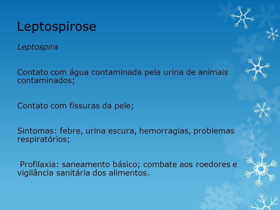 Leptospirose Leptospira