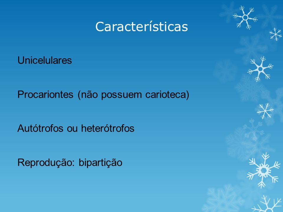 Características Unicelulares Procariontes (não possuem carioteca)