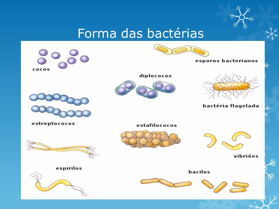 Forma das bactérias