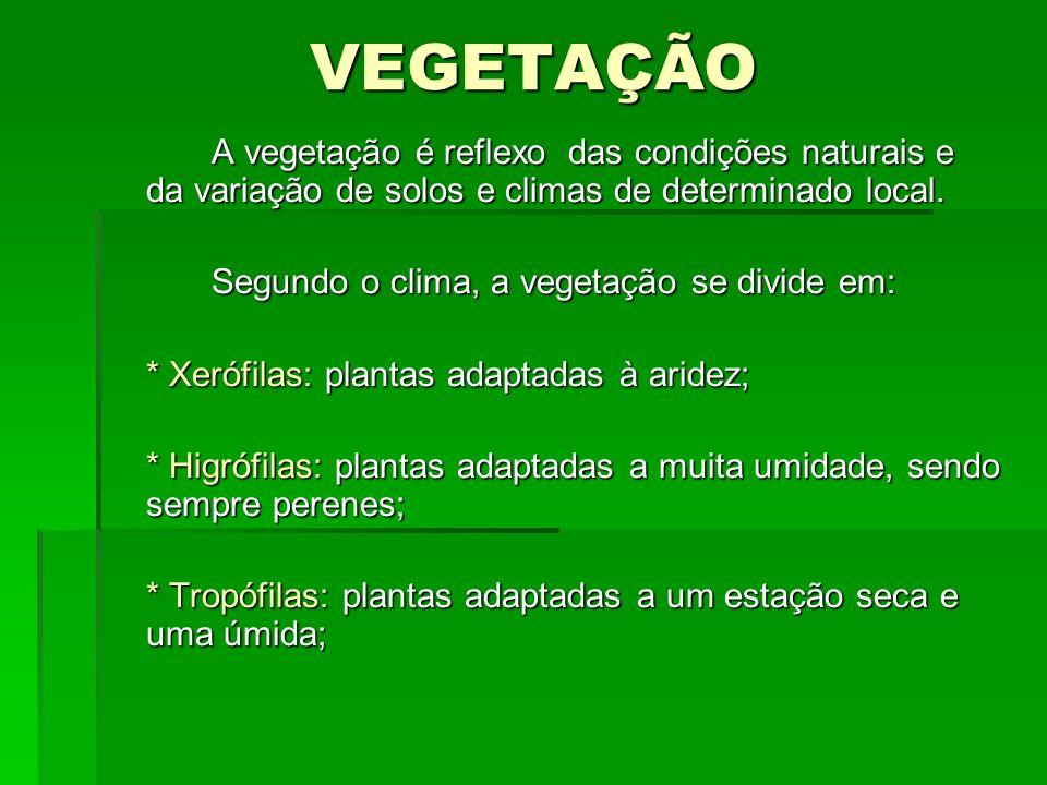 VEGETAÇÃO A vegetação é reflexo das condições naturais e da variação de solos e climas de determinado local.