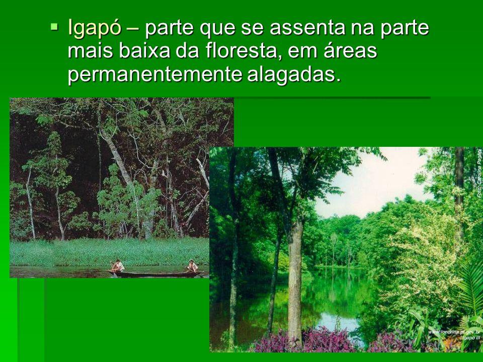 Igapó – parte que se assenta na parte mais baixa da floresta, em áreas permanentemente alagadas.