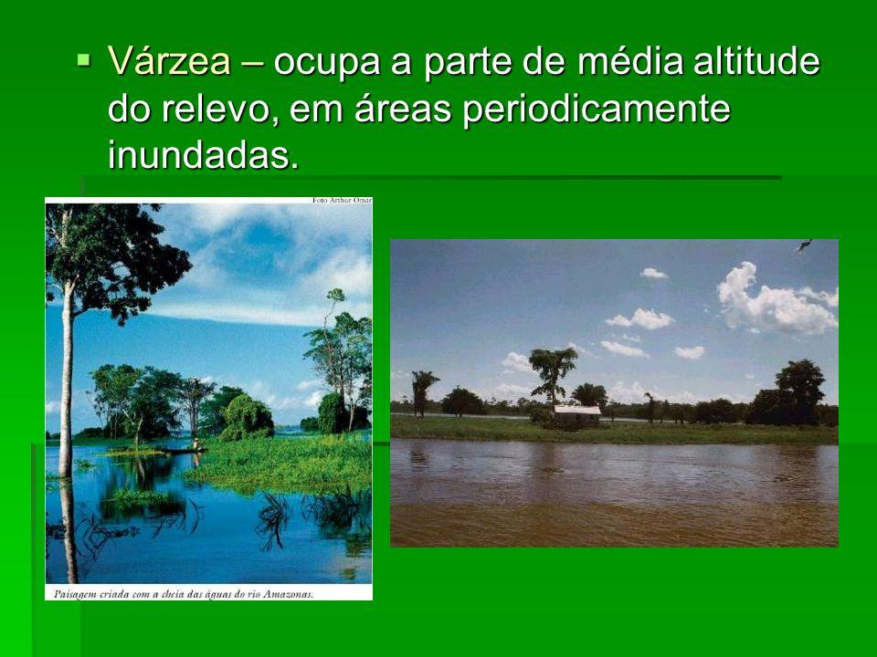 Várzea – ocupa a parte de média altitude do relevo, em áreas periodicamente inundadas.