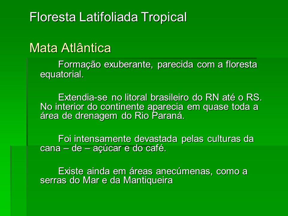 Floresta Latifoliada Tropical Mata Atlântica