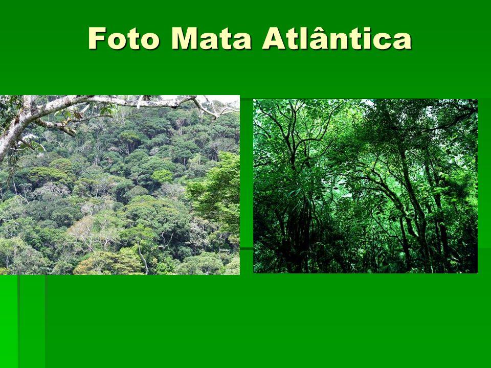 Foto Mata Atlântica