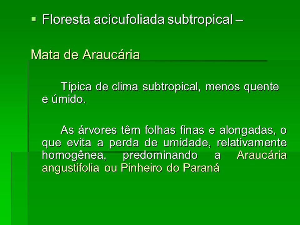 Floresta acicufoliada subtropical – Mata de Araucária